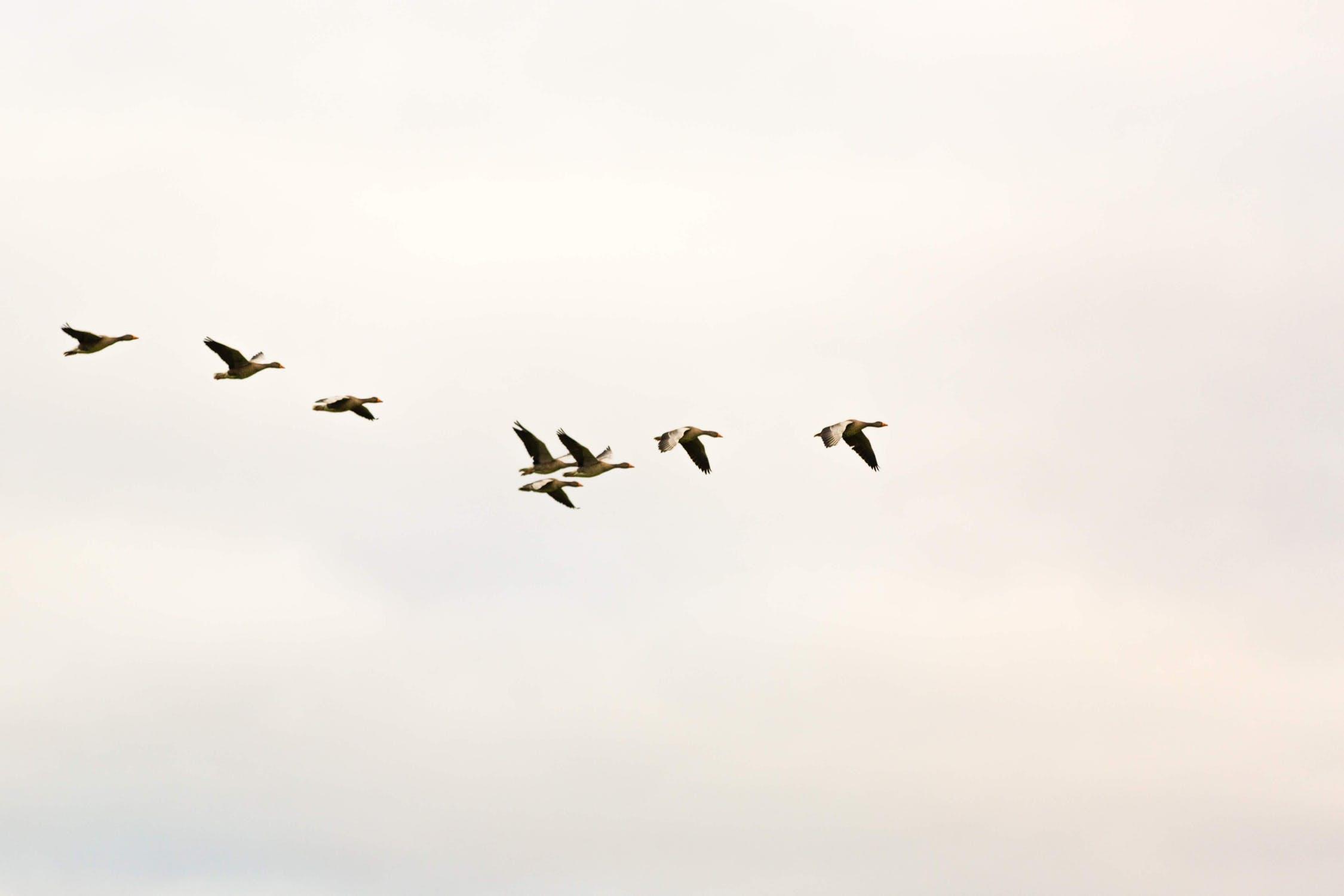 atsb bird strike report